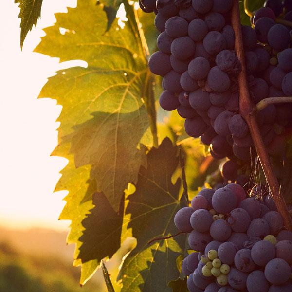 Portugališko vyno tradicijos