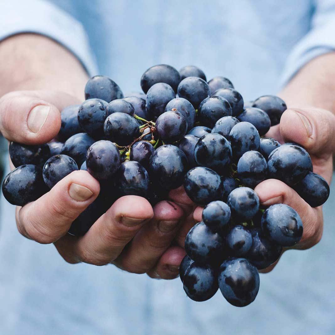 Chris Blandy Pristato 10Y Blandy's Sercial Madeiros Vyną